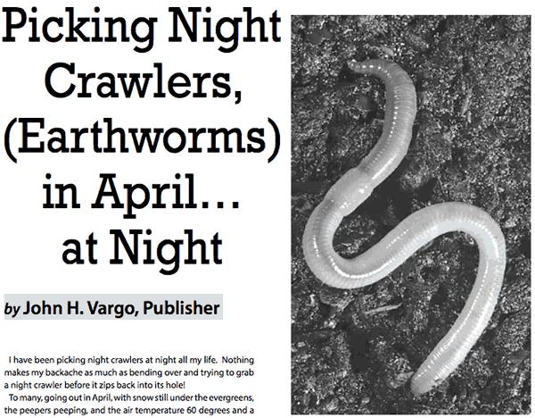 picking night crawlers